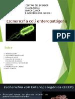 Ecoli Enteropatogena EXPO