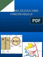 Dezvoltare Pancreas
