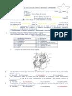 Practica n03 - Celula Vegetal y Animal