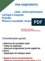 Sistema respiratorio patologia