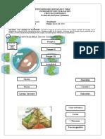 Instrumento de Evaluacion CCNN  1º.docx