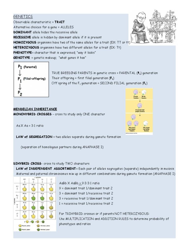 genetics kelley | Dominance (Genetics) | Allele