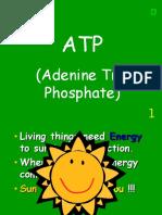 atp photosynthesis respiration