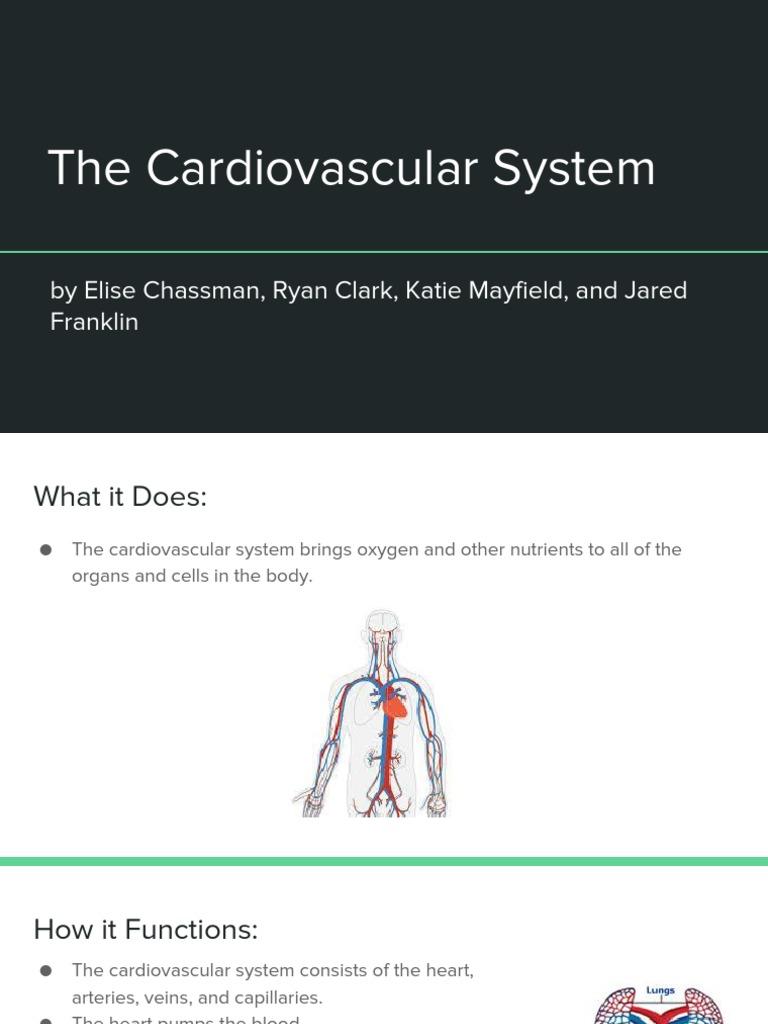 Cardiovascular System Circulatory System Heart