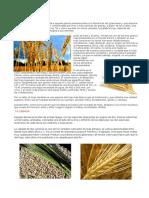 cultivos herbaceos