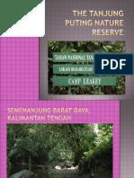 The Tanjung Puting Nature Reserve