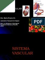 Estructura y Funcion Del Sistema Vascular