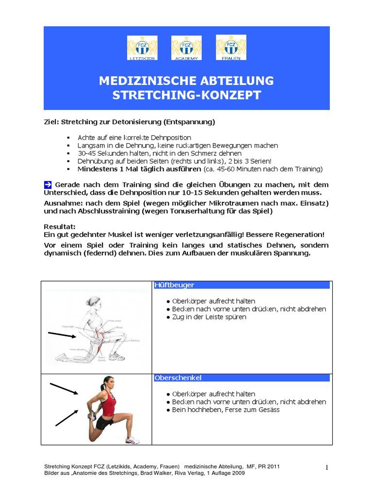 Tolle Kniebeuger Anatomie Zeitgenössisch - Menschliche Anatomie ...