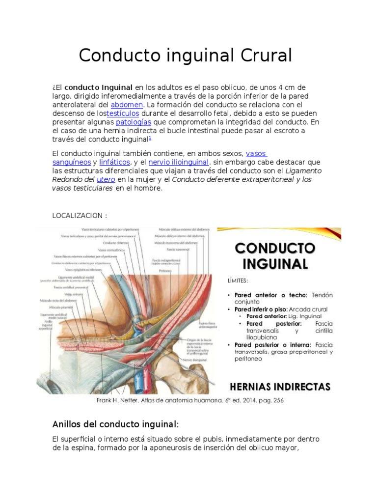 Conducto Inguinal Crural
