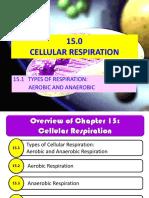Cellular Respiration Hour 1
