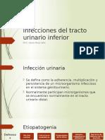 Infecciones de Las Vías Urinarias en Perros y