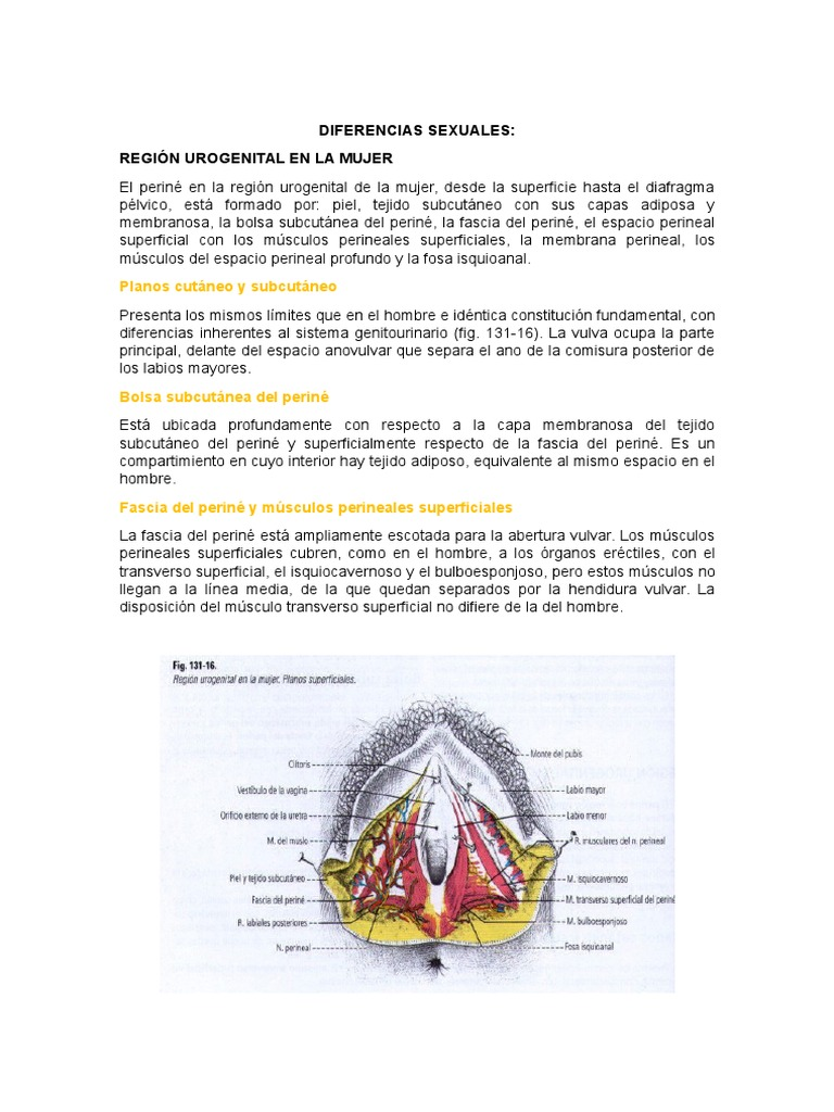 fascias perineales