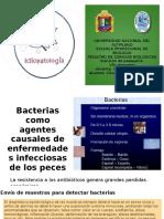 Bacterias Como Agentes Causales de Enfermedades Infecciosas De_ictipatologia_2015_ii