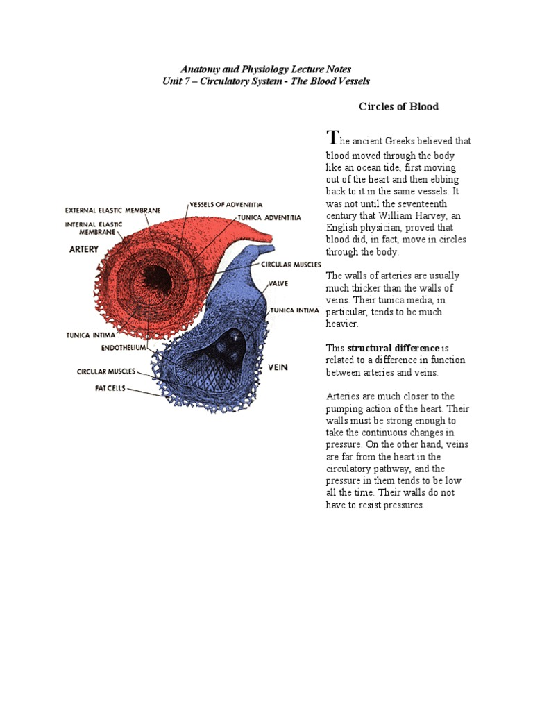 Anatomy Lecture Notes Unit 7 Circulatory System - The Blood Vessels1 ...