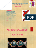 acidos-nucleicos-quimica