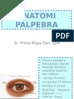 Anatomi PALPEBRA Dan Sistem Lakrimal Edit
