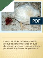 Coccidiosis