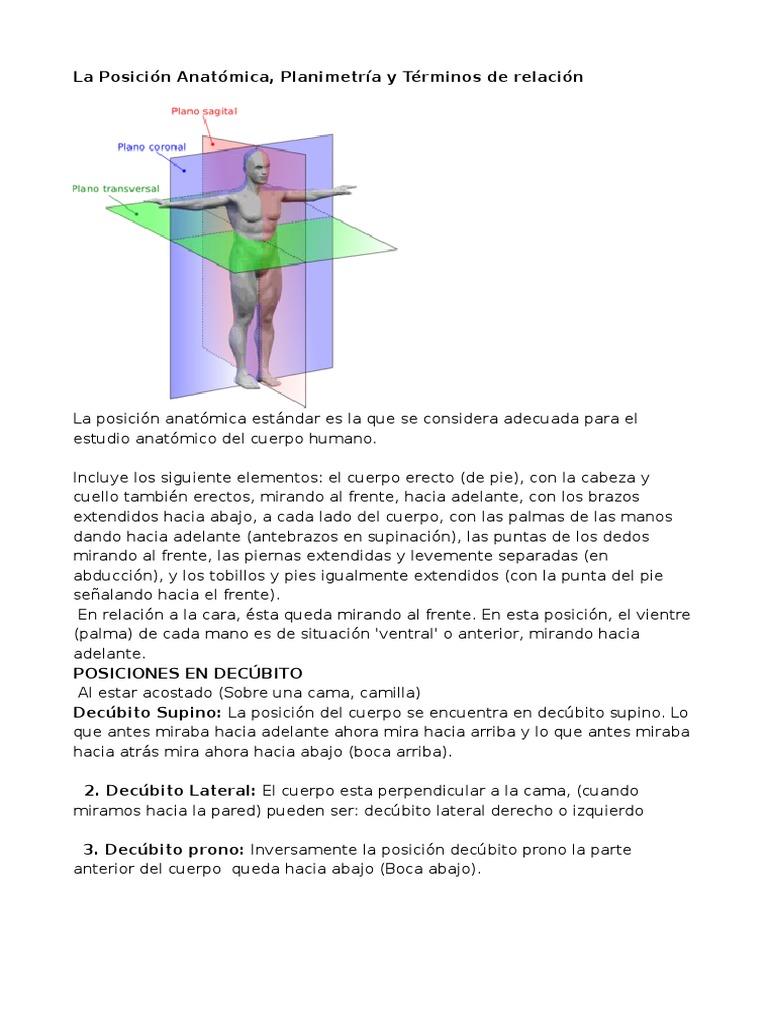 La Posición Anatómica, Planos Anatomicos, Terminologia Anatomica de ...