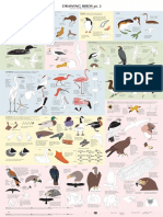 Birds Poster (2)