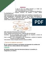 Sistema-nervioso-central Trabajo Para Imprimir