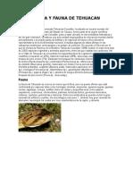 Flora y Fauna de Tehuacan