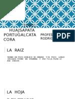 70001 HUAJSAPATA  PORTUGALCATACORA