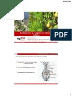 Polinización y Cuajado en Árboles Frutales.