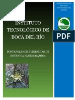 Portafolio de Evidencias Botánica Fanerogámica