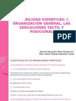 fisiologia somatosensoriales