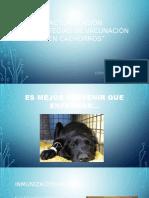 Estrategias de Vacunacion en Cachorros