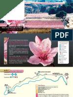 Rutas para ver la Floración en Cieza