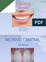 anatomiadentaldearcadasuperiorpermanentes-140123164445-phpapp02.pptx