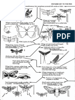 Petersen Field Guide Insects