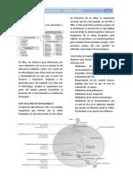 6. Antivirales y Antiparasitarios - Farmacología II