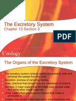 13-3 the Excretory System Web