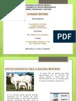 Ganado Bovino de La Rosa Granda Rodriguez