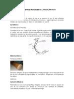 Instrumentos Daystar