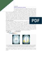 Matemáticas y Neurociencia