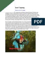 Reproduksi Ikan Cupang