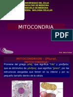 Mitocondria y Respiracion Celular