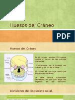 Huesos Del Cráneo y Cara
