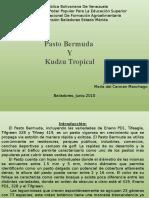 Pasto Bermuda y Kudzu Tropical
