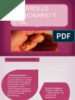 Desarrollo Embrionario y Fetal