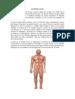 Arterias Del Cuerpo Humano