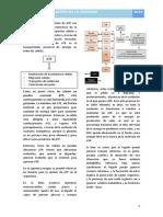 17. Regulación de La Glicemia - Fisiología I