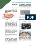 18. Músculo Liso - Fisiología I