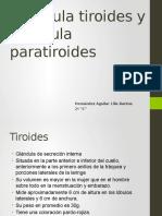 Tiroides y Paratiroides