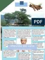 Revista Casi Completa Trabajo Grupal Revision 2