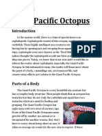 giant pacific octopus essay 1