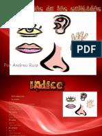 Los Organos de Los Sentidos Andreu